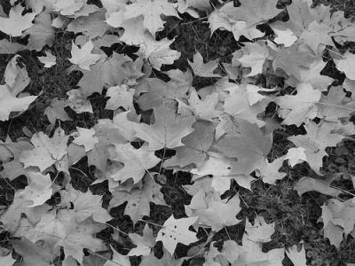 20090922224236-grey-fallen-leaves.jpg