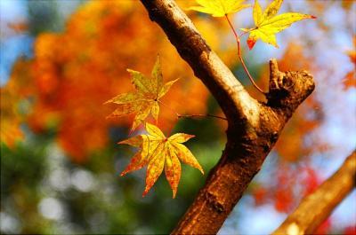 El otoño de Benedetti