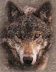 De lobos y viejas costumbres